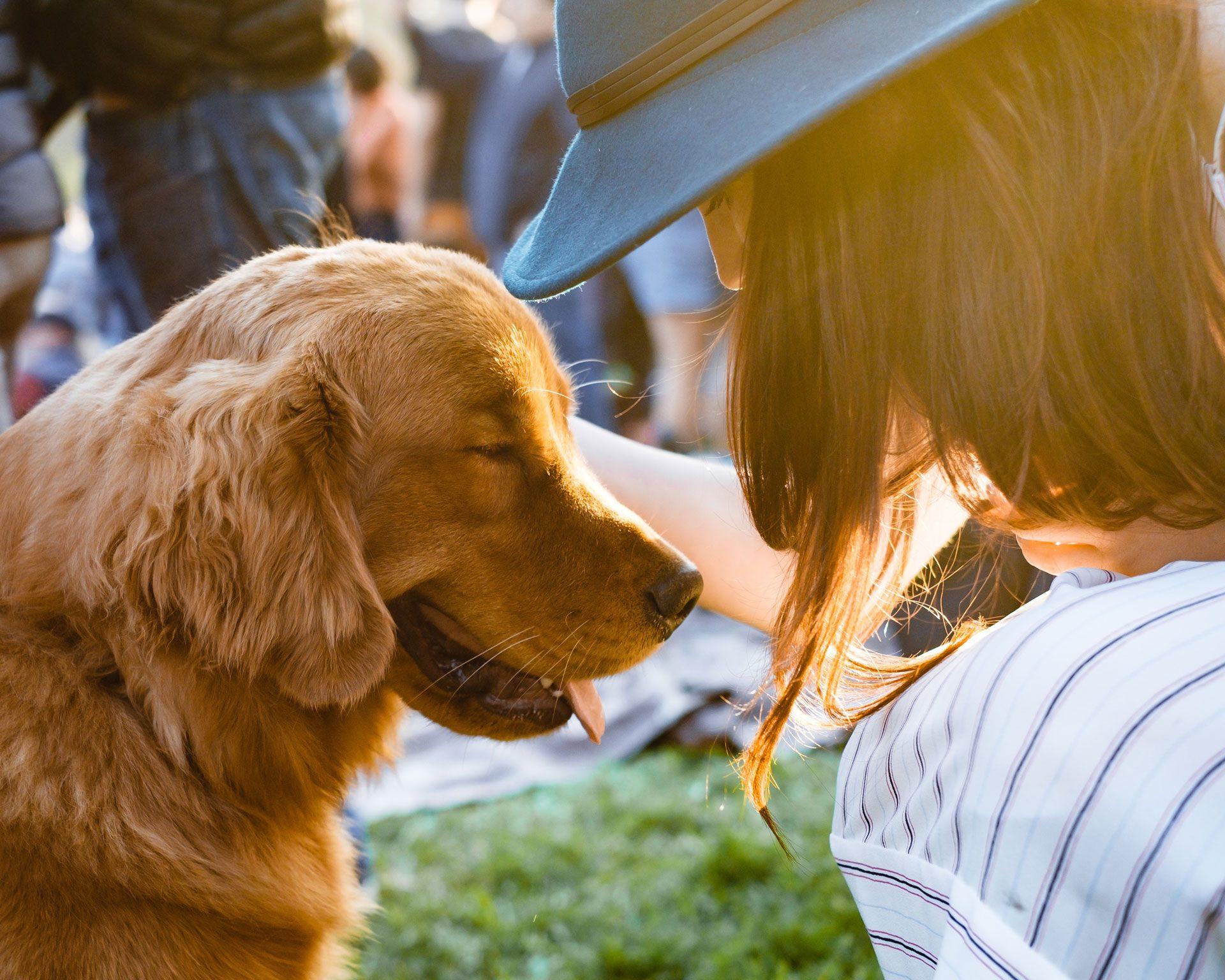 Hondenrassen Wijzer ✔️