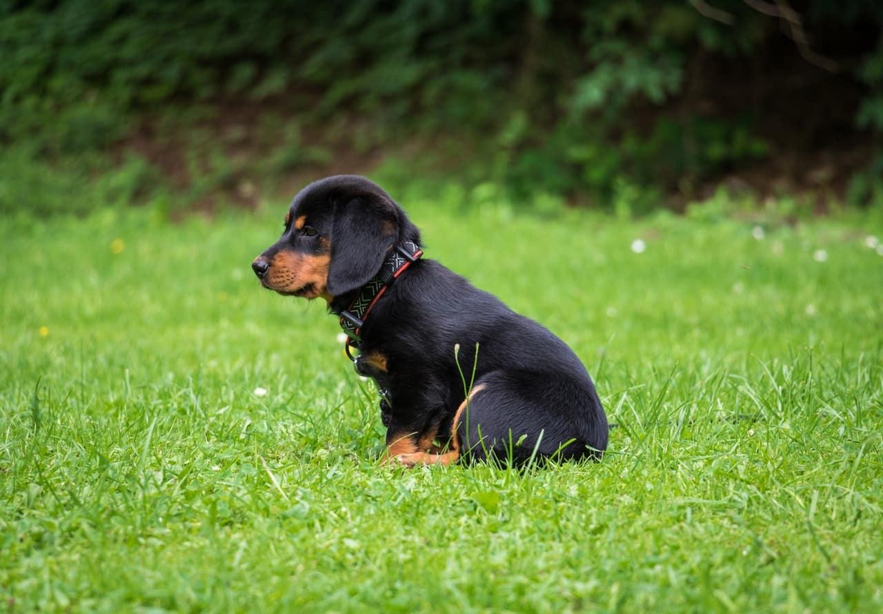 wat ziet een puppy